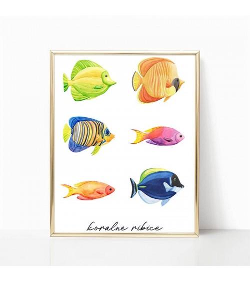 morske ribice slike