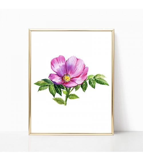cvet šipurka