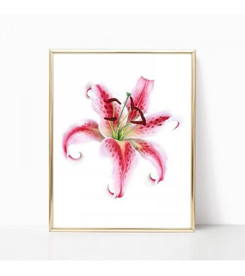 cvet lilijana