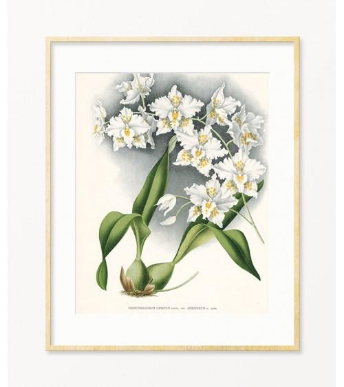 orhideja prodaja