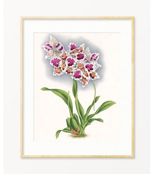 orhideje slike prodaja