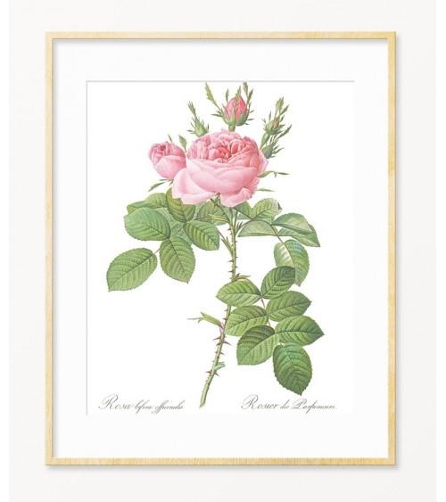 Umetničke slike sa ružama