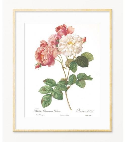 Dekorativne slike za zid Ruže