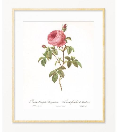 Slike za zid Ruža