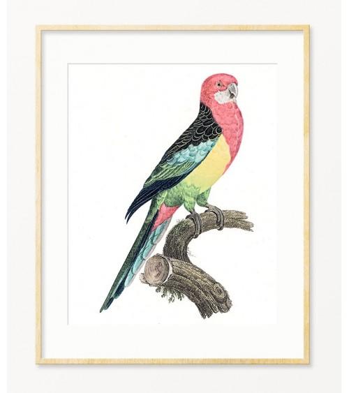Papagaji umetničke slike