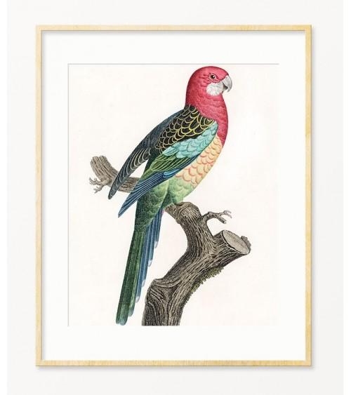 Papagaji slike za zid