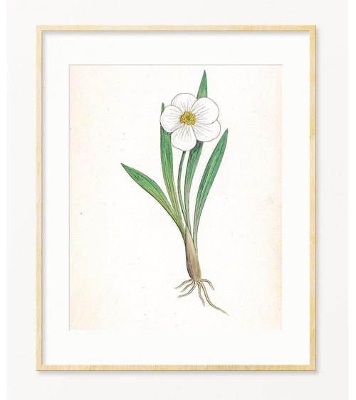 Beli cvet slike za dnevnu sobu