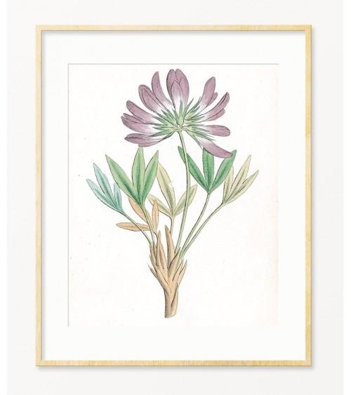 Astragalus slike za zid prodaja