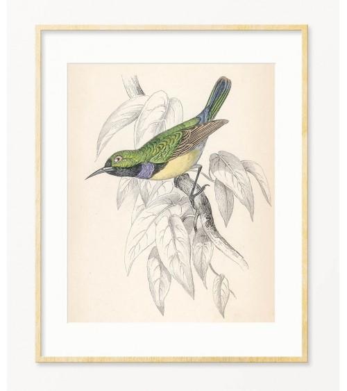 Ptičice slike za zid za dnevni boravak
