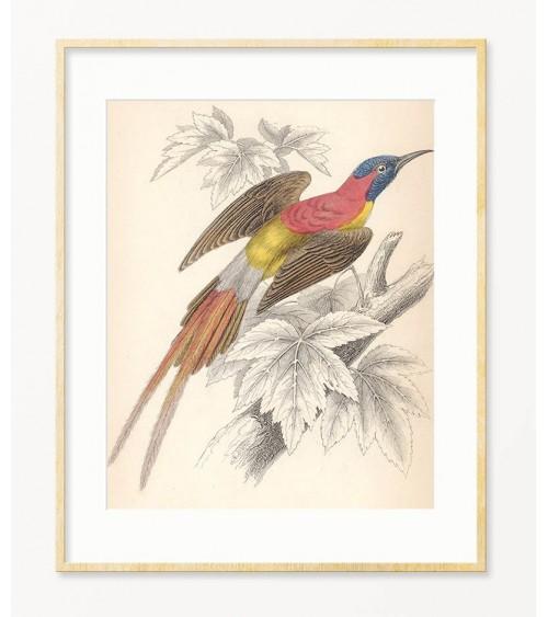 Reprodukcije slika sa pticama za enterijer