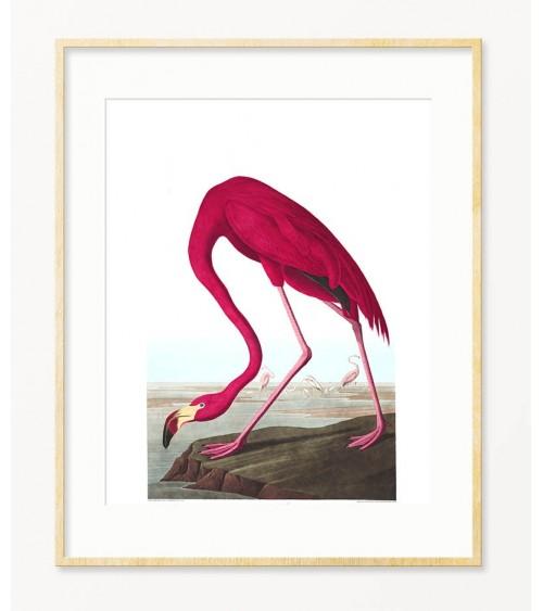 Flamingo printovi za zid prodaja