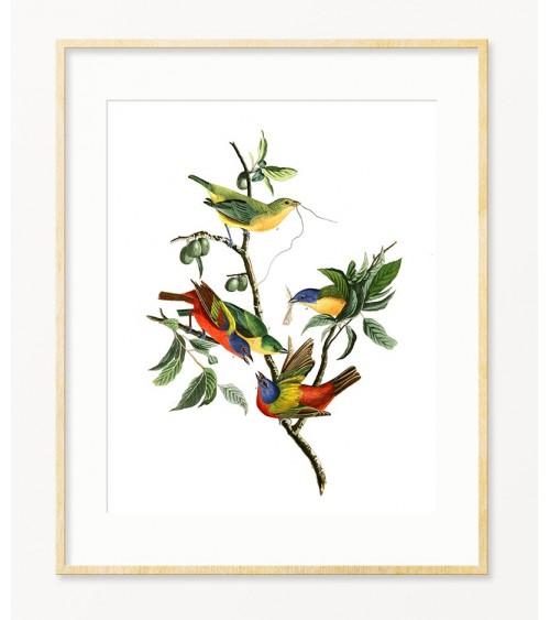 Ptica Zeba dekorativne slike i posteri za zid