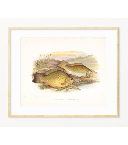 Šaran slike posteri dekoracije za dekoraciju restorana / poklon za ribolovca