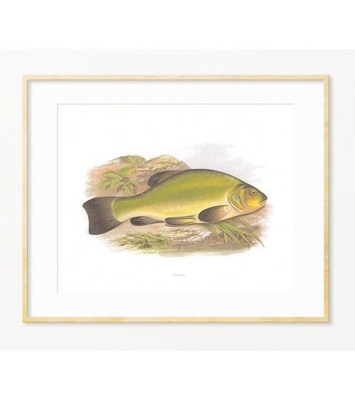 Linjak slike posteri printovi pokloni za ribolovca