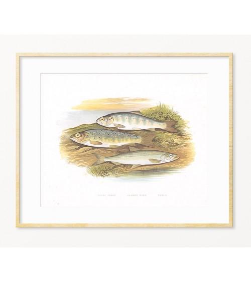 LOSOS - slike posteri printovi za zid sa temom ribolov - Vigvamija.com