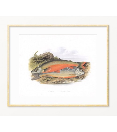 LOSOS - pokloni za ribolovca - uramljeni po želji posteri