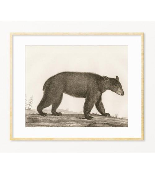 Medved slike za zid prodaja