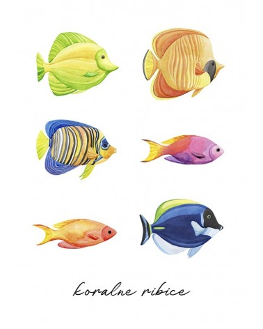 ribice slike