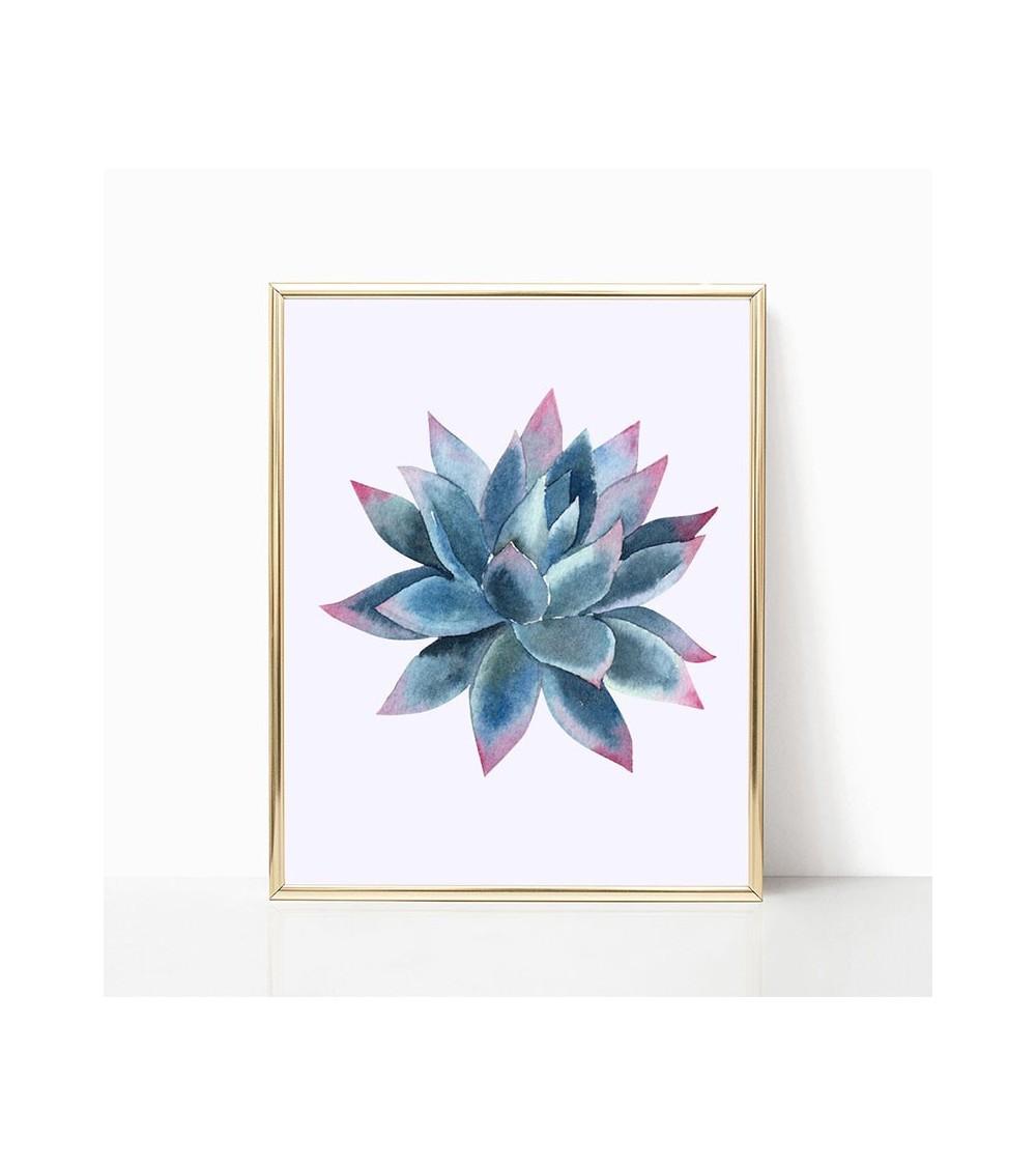 agava sukulenti slike