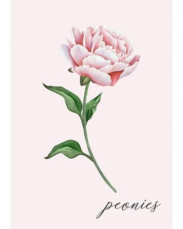 božur cvet