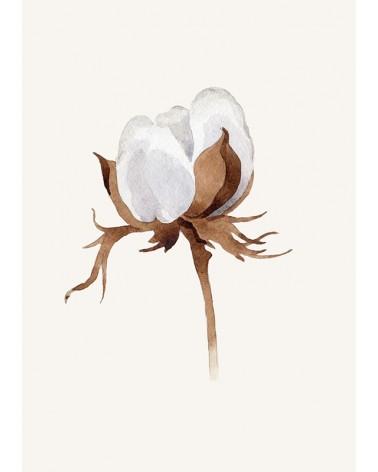 cvet pamuka slike