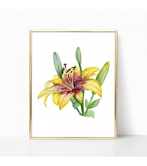 žuti lilijan