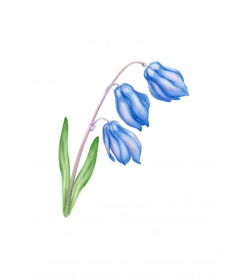 slike cveća za sobu