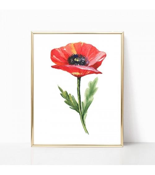 cvet maka slike
