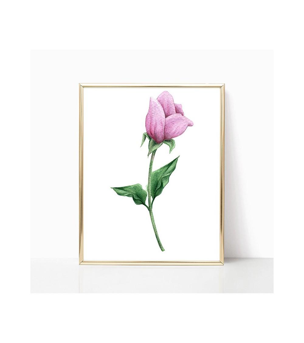 cvet božura slike posteri