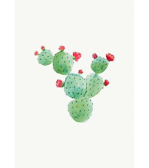 sukulenti kaktusi