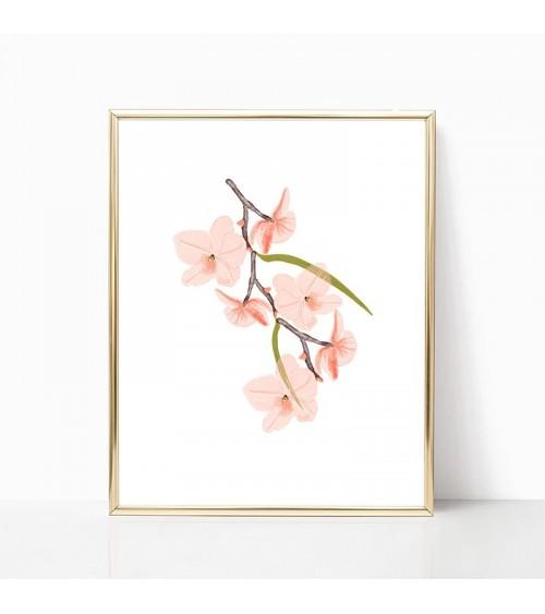 orhideja slike i posteri