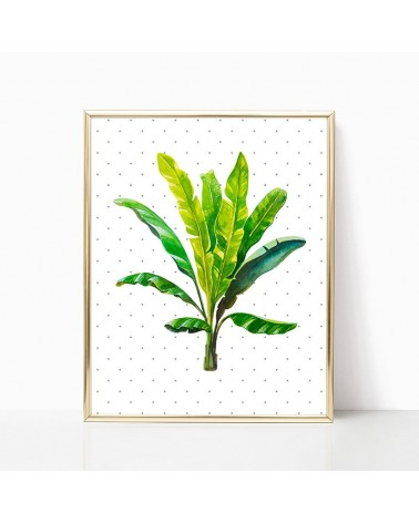 biljka banane slike