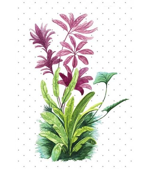 tropske biljke slike