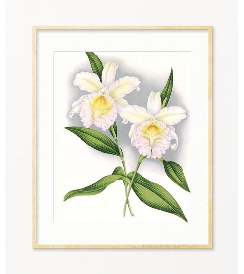 orhideje prodaja online