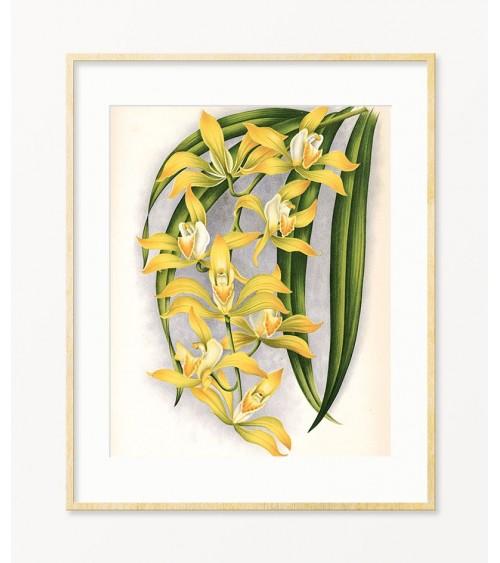 orhideje posteri za zid