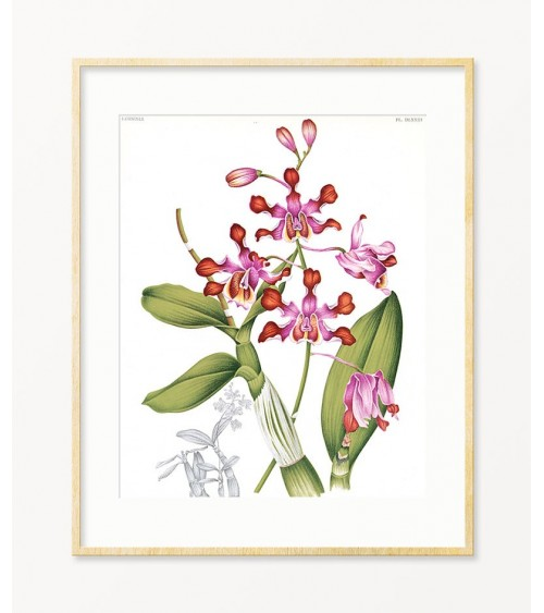 slike sa cvećem prodaja