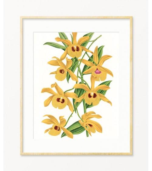 posteri sa orhidejama za sobu