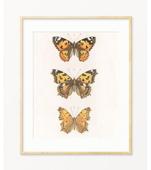 ukrasni leptiri prodaja