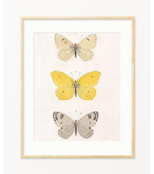 Ukrasne slike za zid Leptiri