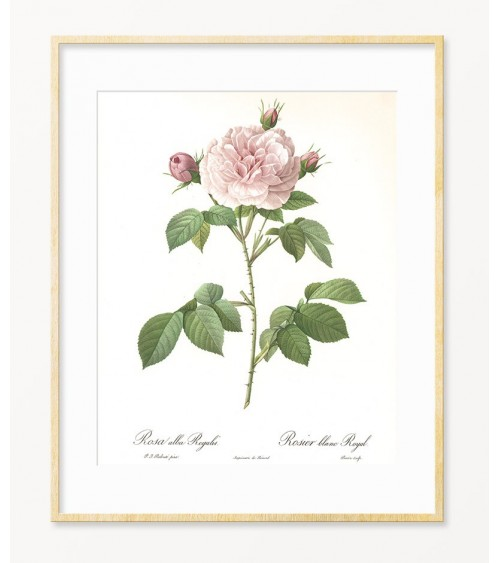 Zidne slike Ruže