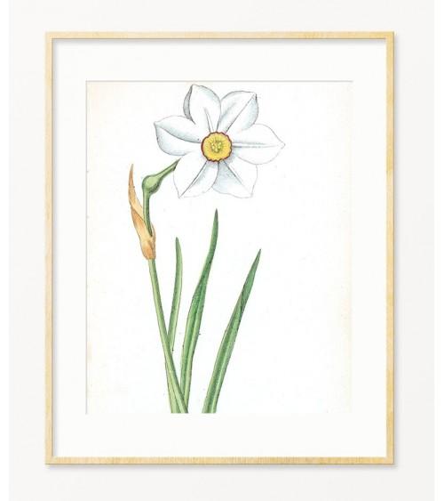 Narcis print za zid prodaja
