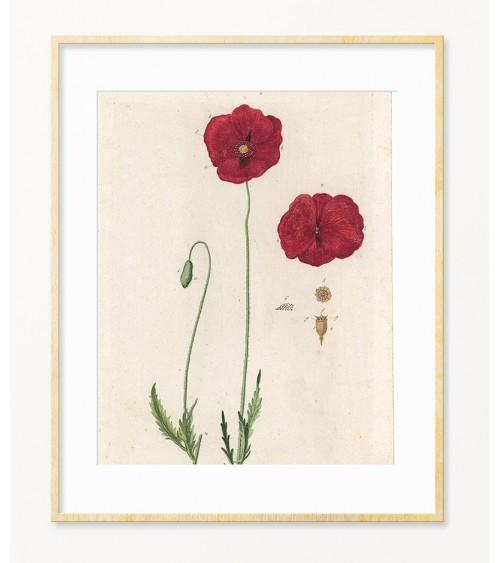 Crveni mak slike i posteri za zid