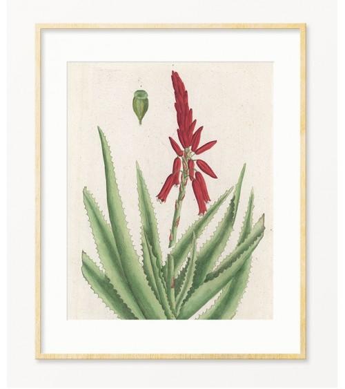 Aloe slika za kuhinju prodaja