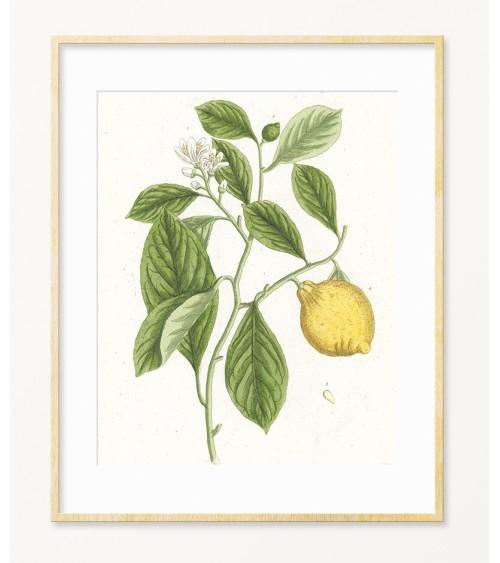 Limun reprodukcije slika prodaja