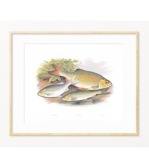 SLATKOVODNE RIBE dekoracije za restoran ili poklon za ribolovca