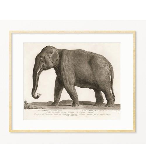 Slon starinske slike printovi