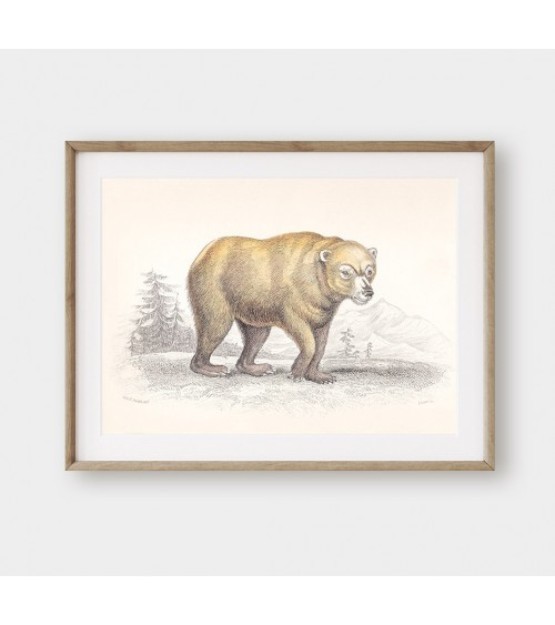 Norveški medved slike za deciju sobu