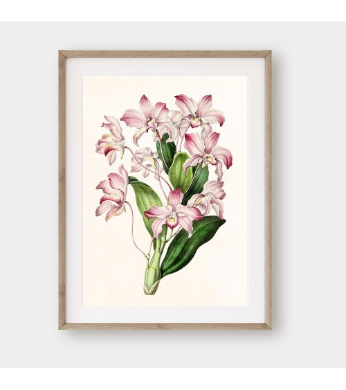 Orhideja žikle print za uramljivanje