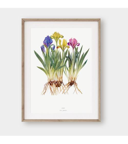 Irisi slike i posteri za zid