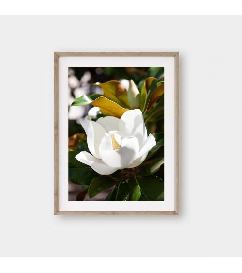 Bela magnolija foto poster